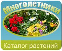 Интернет-энциклопедия многолетних растений